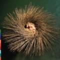 Peter Gabriel - Peter Gabriel: OVO (Virgin/EMI)