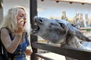 Napoleon Boulevard - Vincze Lilla újra örökbe fogadta Júliát, az ormányos medvét.