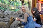 Napoleon Boulevard - A legkiválóbbak adnak jótékonysági koncertet az Állatkertért